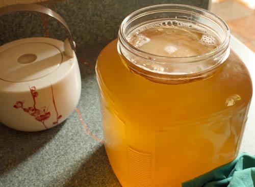the-health-benefits-of-kombucha-immortality-tea