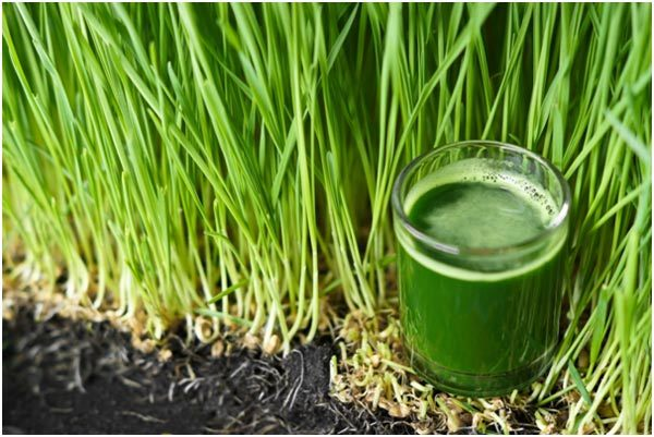 wheatgrass-turns-gray-hair-back-to-its-natural-color