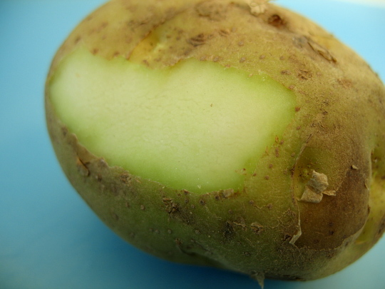 green-potato-are-very-dangerous-for-health-strictly-avoid-this