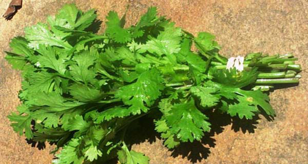 this-herb-kills-even-86-of-lung-cancer-cells
