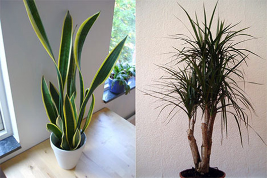 The Best 7 Indoor Plants That Purify The Air Healthy