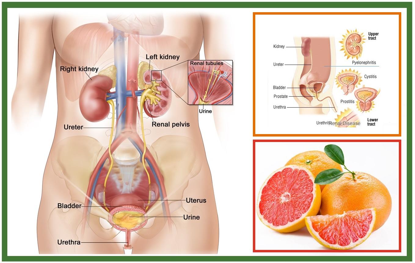 Natural Treatment For Uti Pregnancy